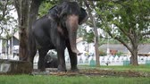 Elephant enjoys shower in a green park in a city Stok Video