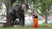 Woman feeds elephant with bananas