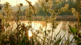 river : grass on riverside at dawn Stock Footage