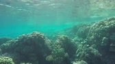dahab : Many fish swim among corals in the Red Sea, Egypt, 4k Stock Footage