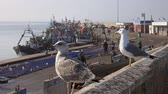 Essaouira fort and seagulls in Morocco, 4k Stockvideo