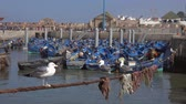 marocchino : Blue fishing boats in the port of Essaouira and seagulls in the foreground, Morocco, 4k Filmati Stock
