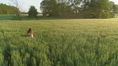 Beautiful girl walking in the wheat field at sunset, flying around, 4k
