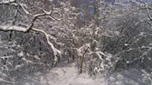 menő : Beautiful winter forest covered with snow, slider dolly shot 4k