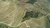 виноградник : Aerial top view of the terraced vineyards in the Douro Valley, Portugal, 4k