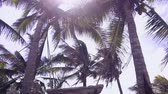 sunbeams : Caribbean beach with coconut trees and swing, 4k video Stock Footage