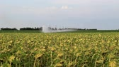 In the field planted with sunflowers, an irrigation system is in place to supply water from the canal. Stock mozgókép