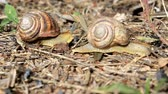 Snails crawl around the field in search of food. Stock mozgókép