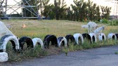 A group of white, domestic goats are moving towards the past.