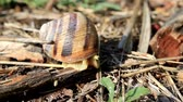 héj : The striped snail has become bold and comes out of its house to eat fresh grass.