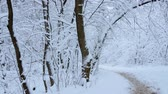 Russian winter. Winter forest, walking paths among the snow-covered trees