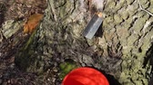 сок : collecting birch tree sap early spring slow motion video