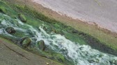 musgoso : old stream with green water at the old medieval castle Stock Footage