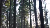 beautiful autumn forest with shining sun in the early morning Stock Footage
