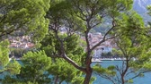 dalmácia : Makar Riviera, Croatia. View of the beautiful green pine trees on the background of the old town