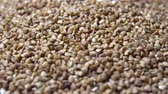 boekweit : Rotating raw buckwheat close-up 4k Stockvideo