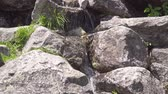 Словакия : Mountain waterfall in the Polish Tatras