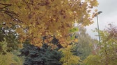 novembro : view of autumn Park with yellow and red leaves Vídeos