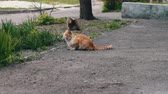 abandoned alley : Homeless cats before in grass