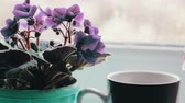 strong tea : Cup with a hot drink with a steam that stands on a windowsill surrounded by flowering flowers close up view