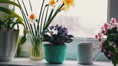 strong tea : Cup with a hot drink with a steam that stands on a windowsill surrounded by flowering flowers