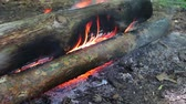 çatırtı : Huge burning firewood or logs lie on the green and burn in the flames of fire in open air