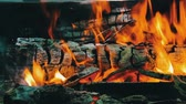 çatırtı : Close up view of a huge burning firewood or logs lie on the green and burn in the flames of fire in open air