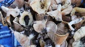 common heather : Harvest of freshly picked mushrooms in the forest that lie on a table close up view Stock Footage