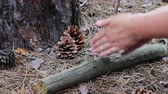 fricção : Woman tries to breed a fire in the forest with the help of the force of friction of a wooden stick on a log