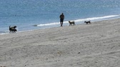 glides : Silhouette of a man who plays with his dogs on beach against a background of clear, blue Mediterranean Sea