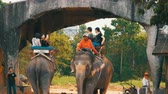 заподлицо : PATTAYA, THAILAND - DECEMBER 26, 2017: Elephants in elephant village. The elephants on which the tourists ride Стоковые видеозаписи