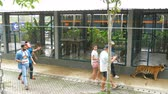 carnívoro : PATTAYA, THAILAND - DECEMBER 29, 2017: Tiger Zoo. Tigers walk behind a fence. Tourists and zoo workers walk with a tiger