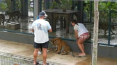 плотоядный : PATTAYA, THAILAND - DECEMBER 29, 2017: Tiger Zoo. Tigers walk behind a fence. Tourists and zoo workers walk with a tiger