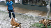 masožravý : PATTAYA, THAILAND - DECEMBER 29, 2017: Tiger Zoo. Tigers walk behind a fence. Tourists and zoo workers walk with a tiger