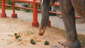 заподлицо : The elephant eats pineapples on ground with the help of a trunk