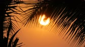 canoe : Stunning beauty of the red sunset of a large sun against the backdrop of palm leaves Stock Footage