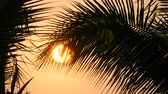 bolivia : Stunning beauty of the red sunset of a large sun against the backdrop of palm leaves Stock Footage
