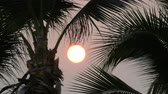 Боливия : Great sunset red sun against background of palm leaves