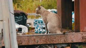 abandoned alley : Homeless beautiful smoky cat on shabby street for the poor Stock Footage
