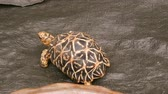 sealife : Funny turtle crawls on the floor of the woller in zoo