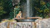 feroz : Beautiful majestic tiger on the background of picturesque waterfall
