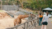 camelopardalis : Si Racha, Thailand - January 11, 2018: Tourists are fed from hands a giraffe in the zoo khao kheo
