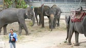 migração : PATTAYA, THAILAND - DECEMBER 30, 2017: Many different indian elephants walk around valery on crocodile farm in Pattaya Stock Footage