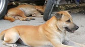 dominant : Dogs rest on streets of the city