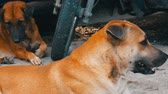 finding : Cute homeless dogs lie on street