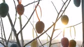 fowl : Spring sunrise breaks through the decorative branches on which the hung colorful Easter eggs