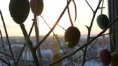 gałązka : Easter multicolored eggs on white ornamental branches. A stylish bouquet of Easter eggs stands on windowsill in the rays of the dawn sun. Slow motion