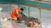 katil : PATTAYA, THAILAND - DECEMBER 30, 2017: Animal trainer makes a show with crocodiles. Crocodile farm Pattaya, Thailand. Stok Video