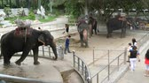 экспедиция : PATTAYA, THAILAND - DECEMBER 30, 2017: Many different indian elephants walk around valery on crocodile farm in Pattaya Стоковые видеозаписи