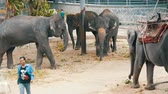 gigantesco : PATTAYA, THAILAND - DECEMBER 30, 2017: Many different indian elephants walk around valery on crocodile farm in Pattaya Vídeos